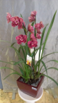 GF29 - Seasonal Orchid Plant - $80.00 - to $100.00